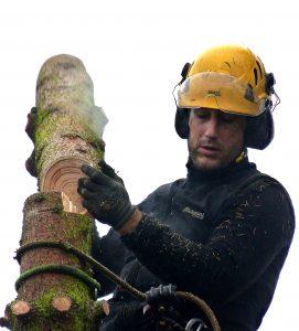 Baumpfleger Stefano beim Sägen im Baum