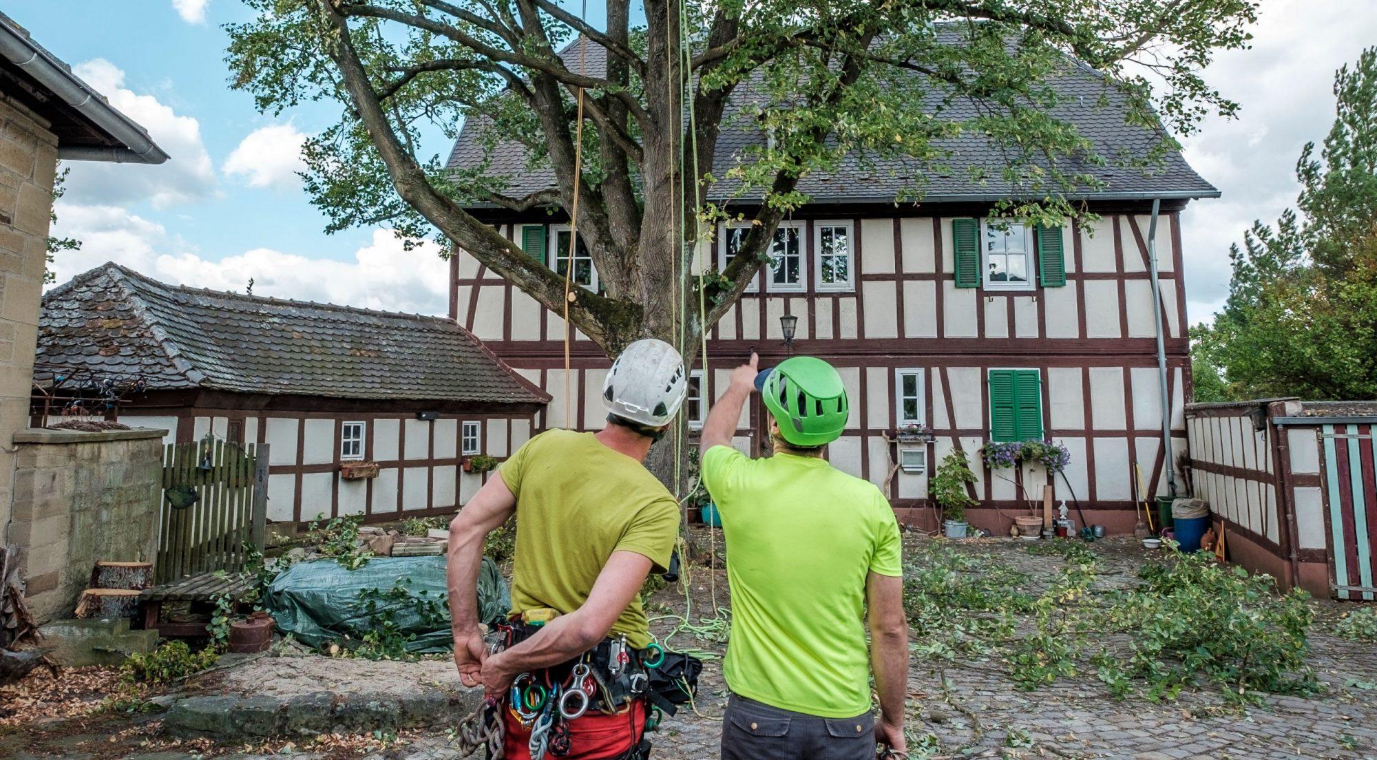 Baumpflege Hofmann Röckelein